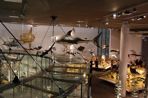 14774525266_cf954f4d4c Choosing The Best Boston Museums For Your Family Trip